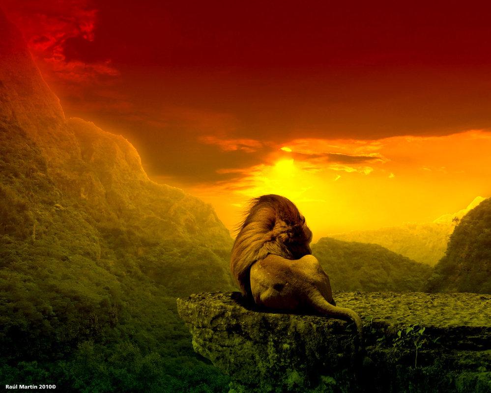 Reggae Lion Wallpaper - WallpaperSafari Rasta Lion Wallpapers