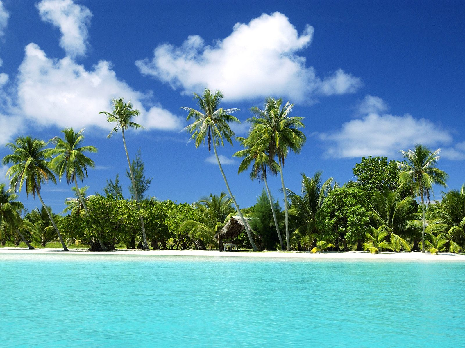 download tropical beach scenes wallpaper which is under the beach 1600x1200