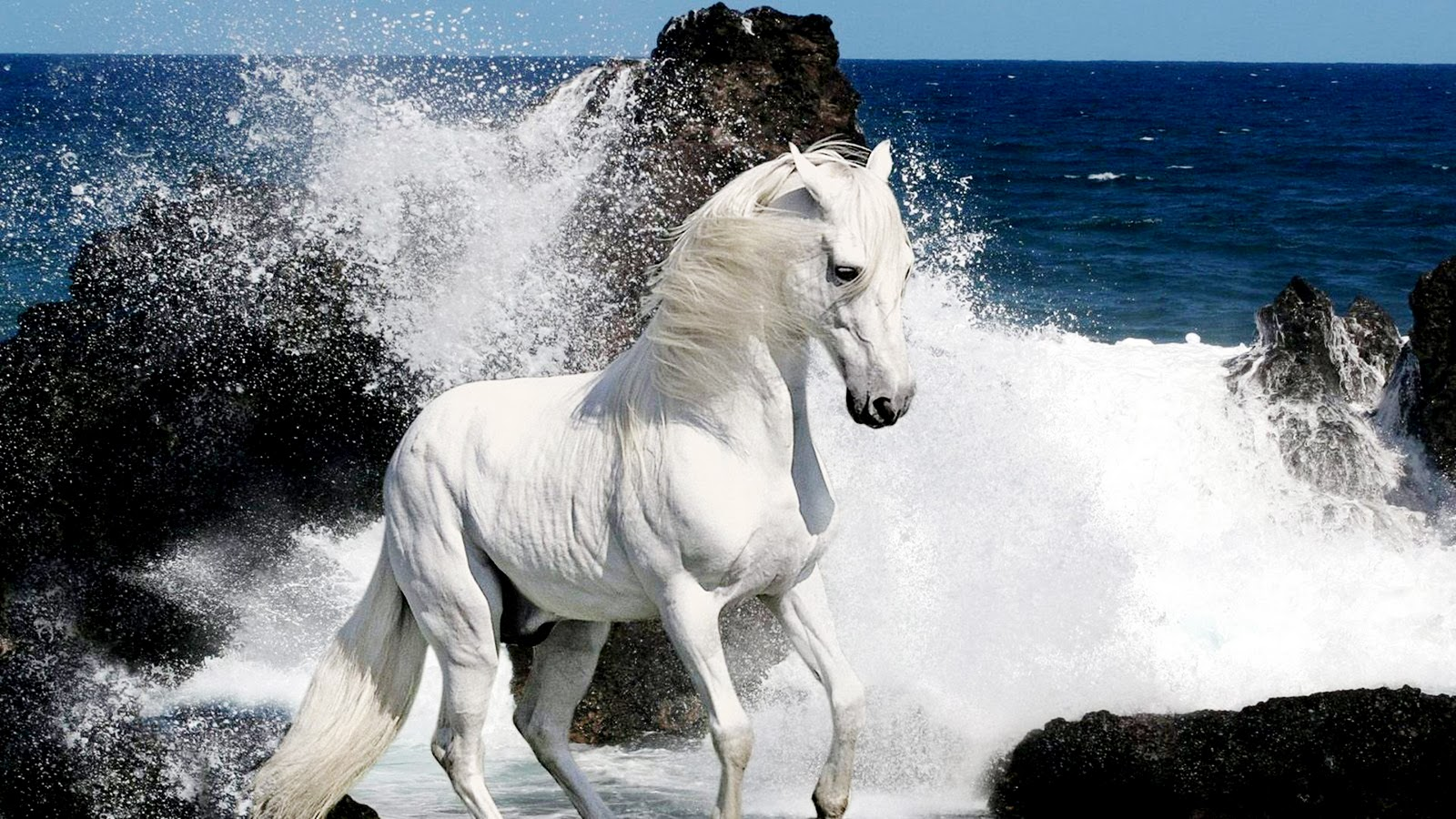 White Horses HD Wallpapers Desktop Wallpapers 1600x900