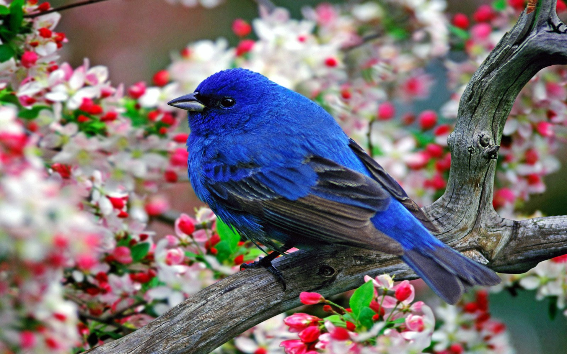 Птицы на ветке  № 1652654 без смс