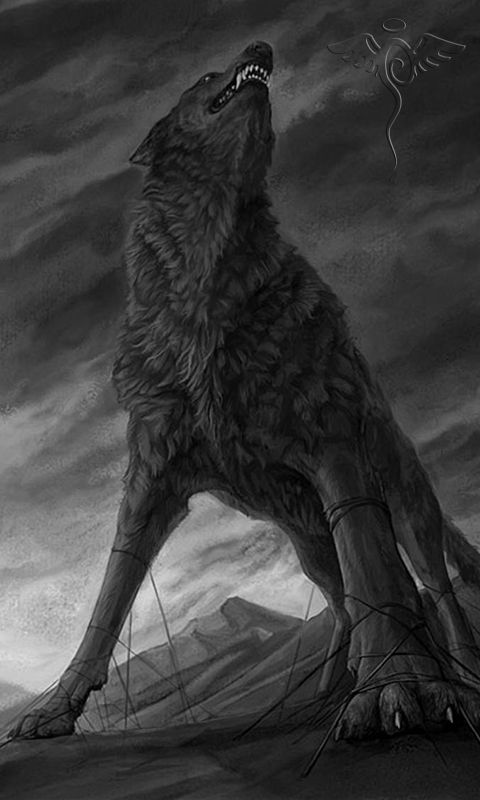 Wolf480x800800x480freehotmobile phone wallpaperswwwwallpaper 480x800