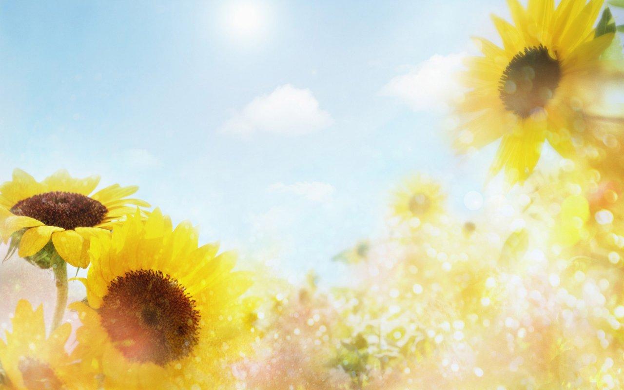 flowers for flower lovers Flowers background desktop 1280x800