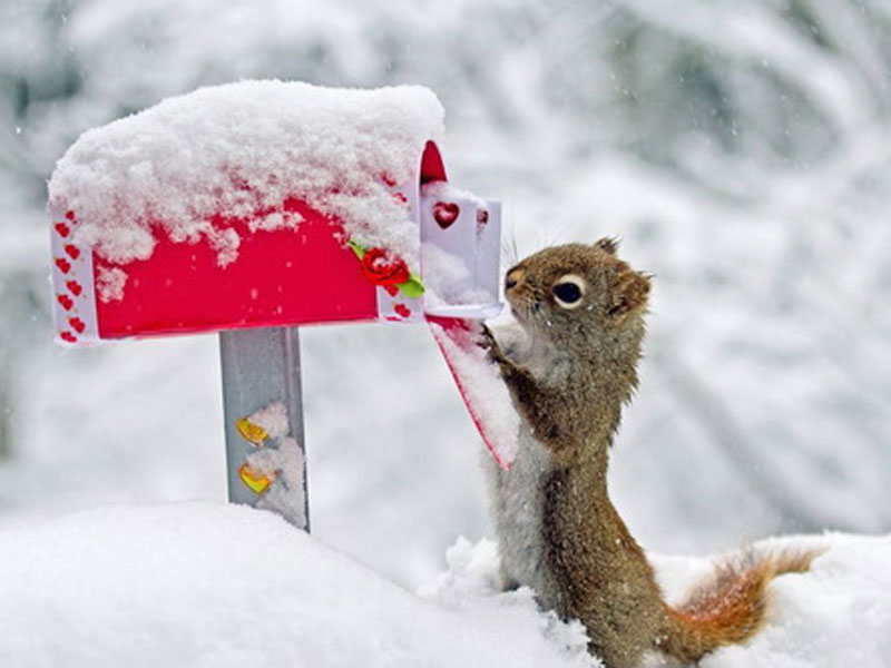 Wallpapers Download Funny Animals Wallpapers 800x600