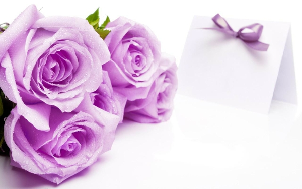 roses flowers roses white background purple flowers 1280x800 wallpaper 600x375