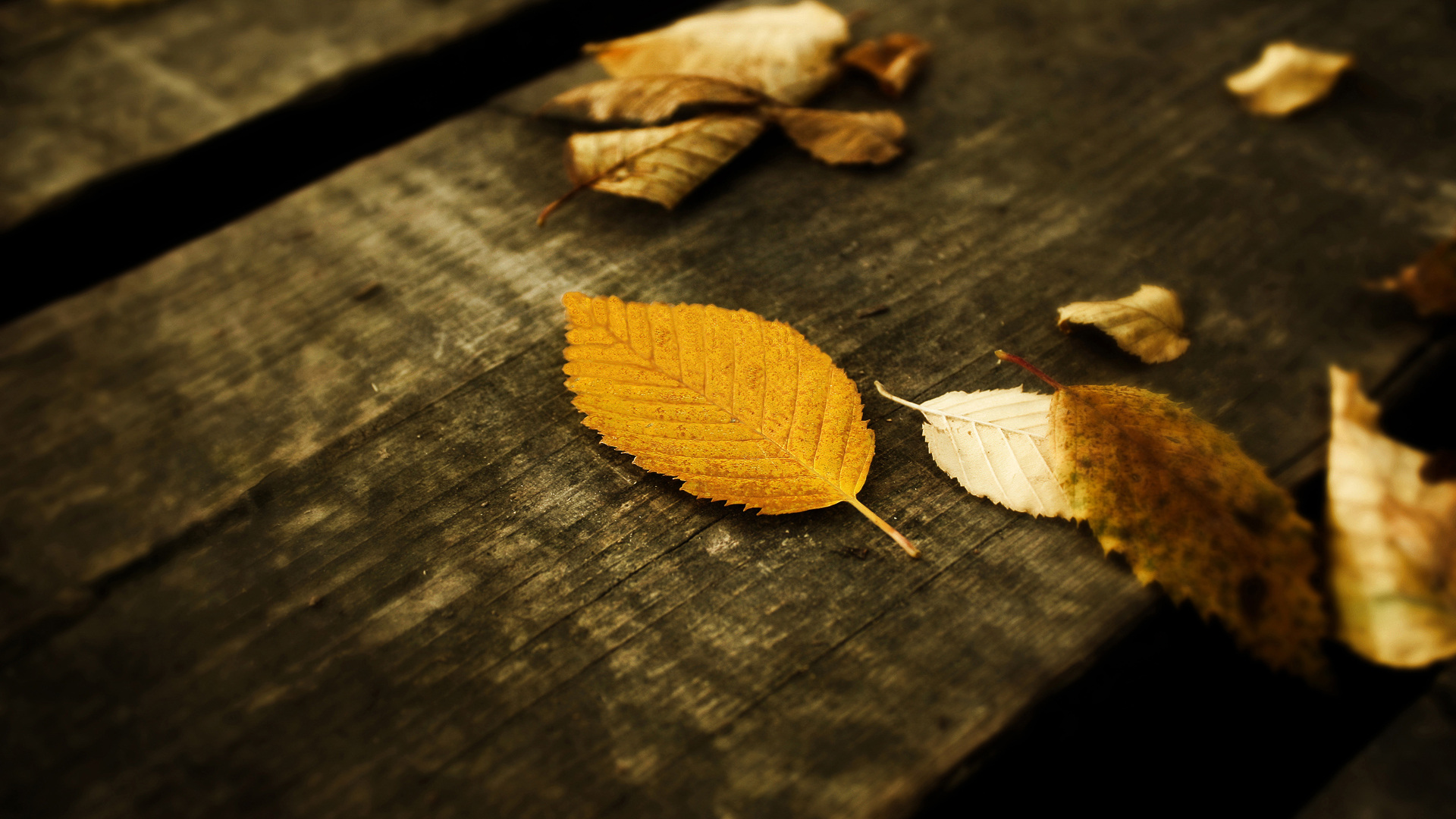 Leaves HD Wallpaper Theme Bin   Customization HD Wallpapers 1920x1080