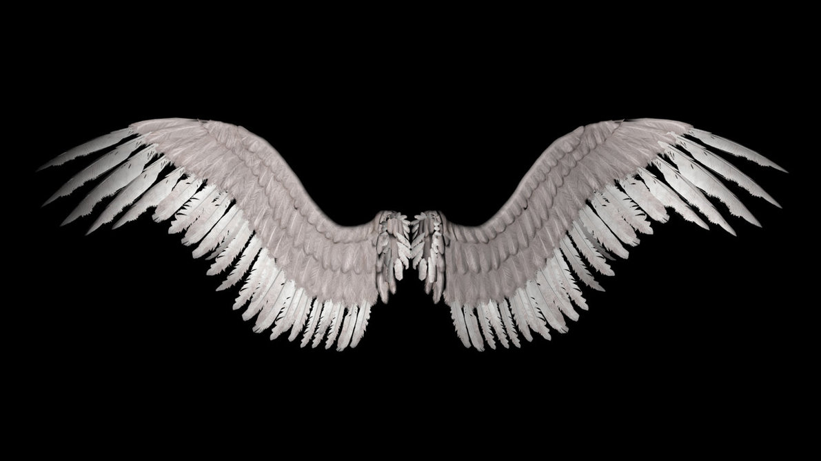 New Angel Wings by shadavar stock 1191x670
