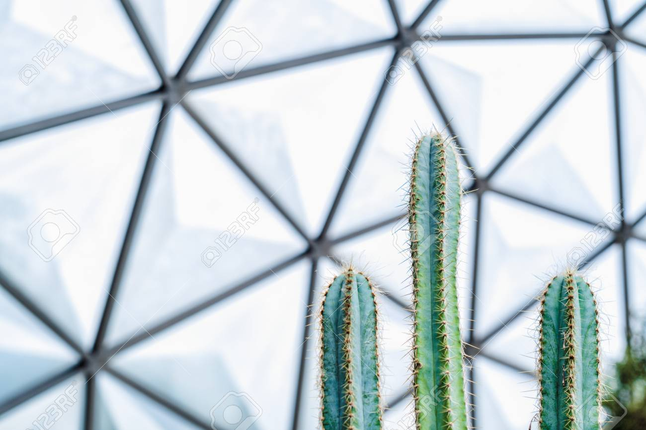Close Up Of Green Cactus In The Geodesic Dome Glasshouse Nature 1300x866