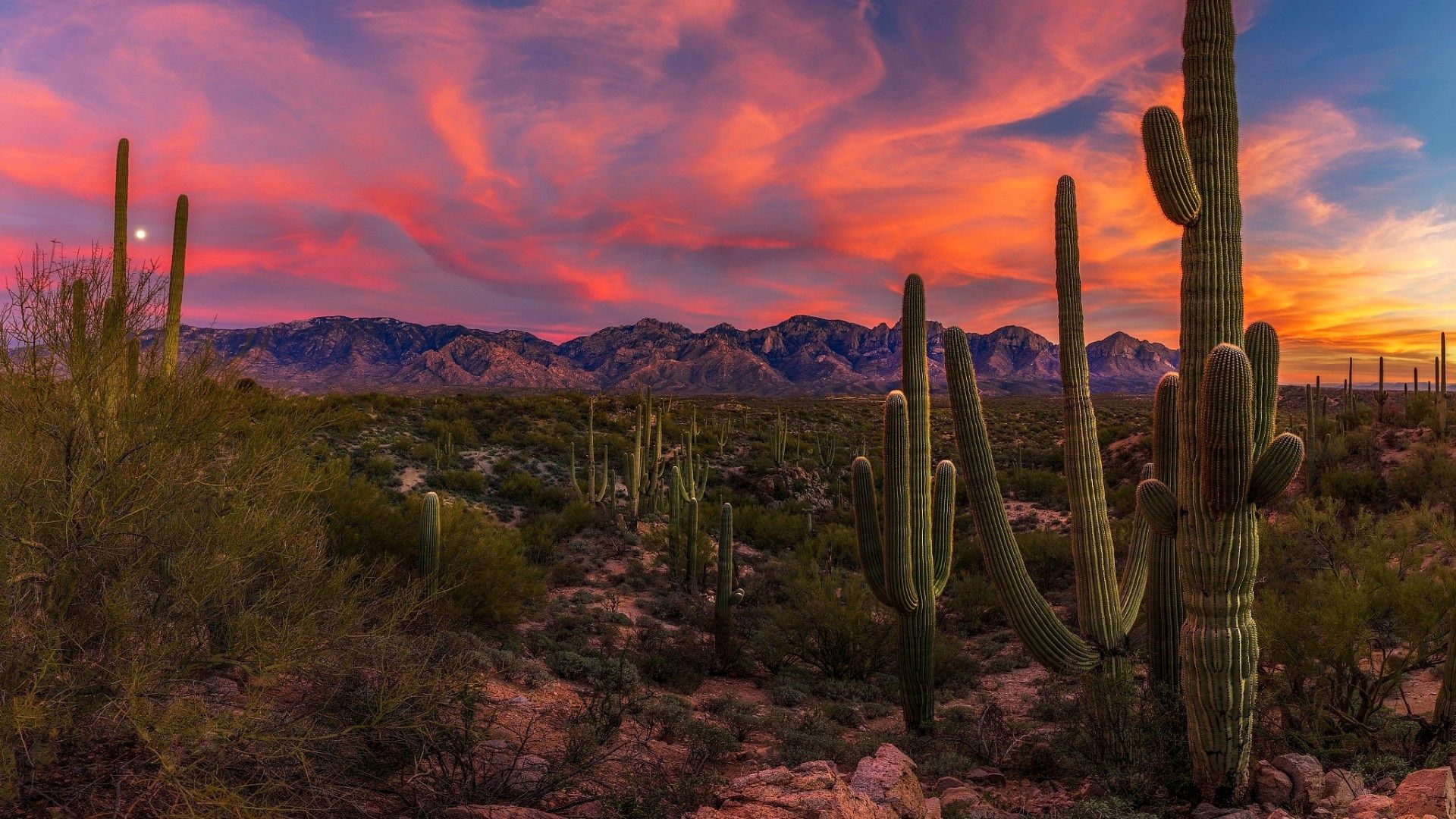 55 Saguaro National Monument Sunset Wallpapers   Download at 1920x1080