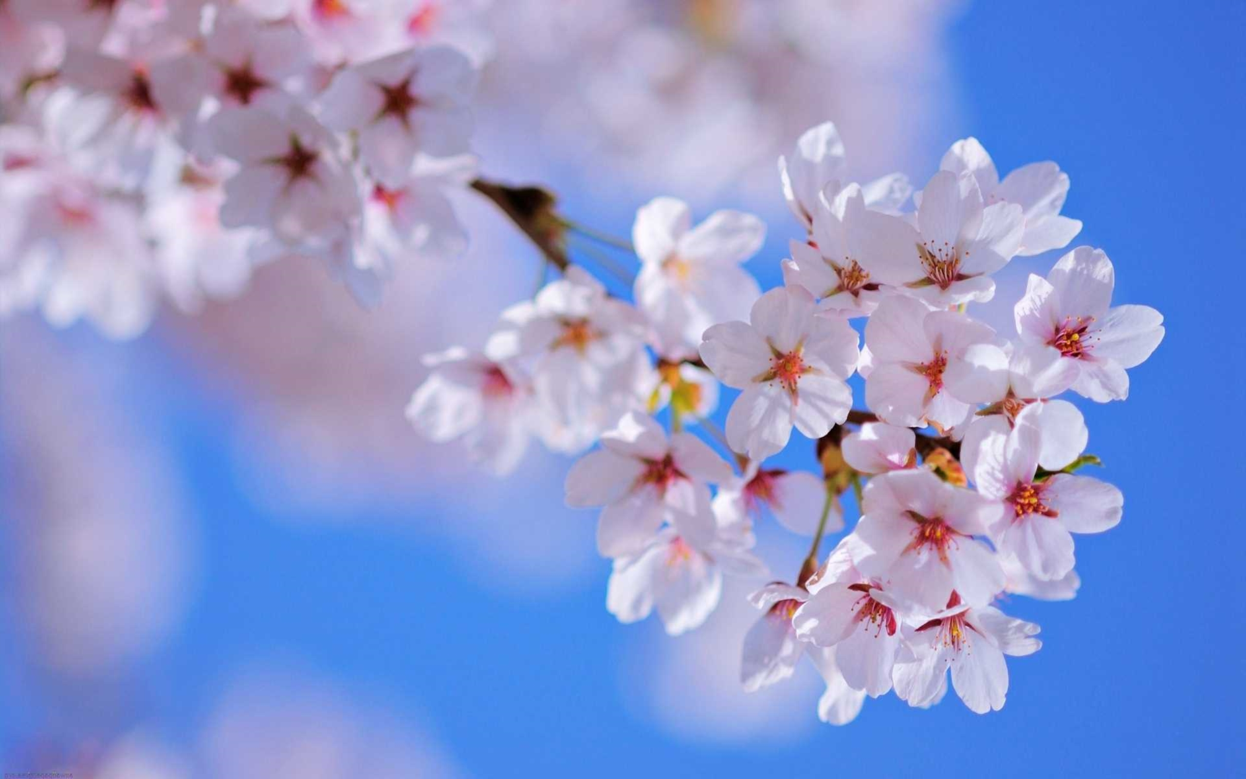 Spring Flowers Wallpaper 38 Spring Flowers HD Wallpapers 2560x1600
