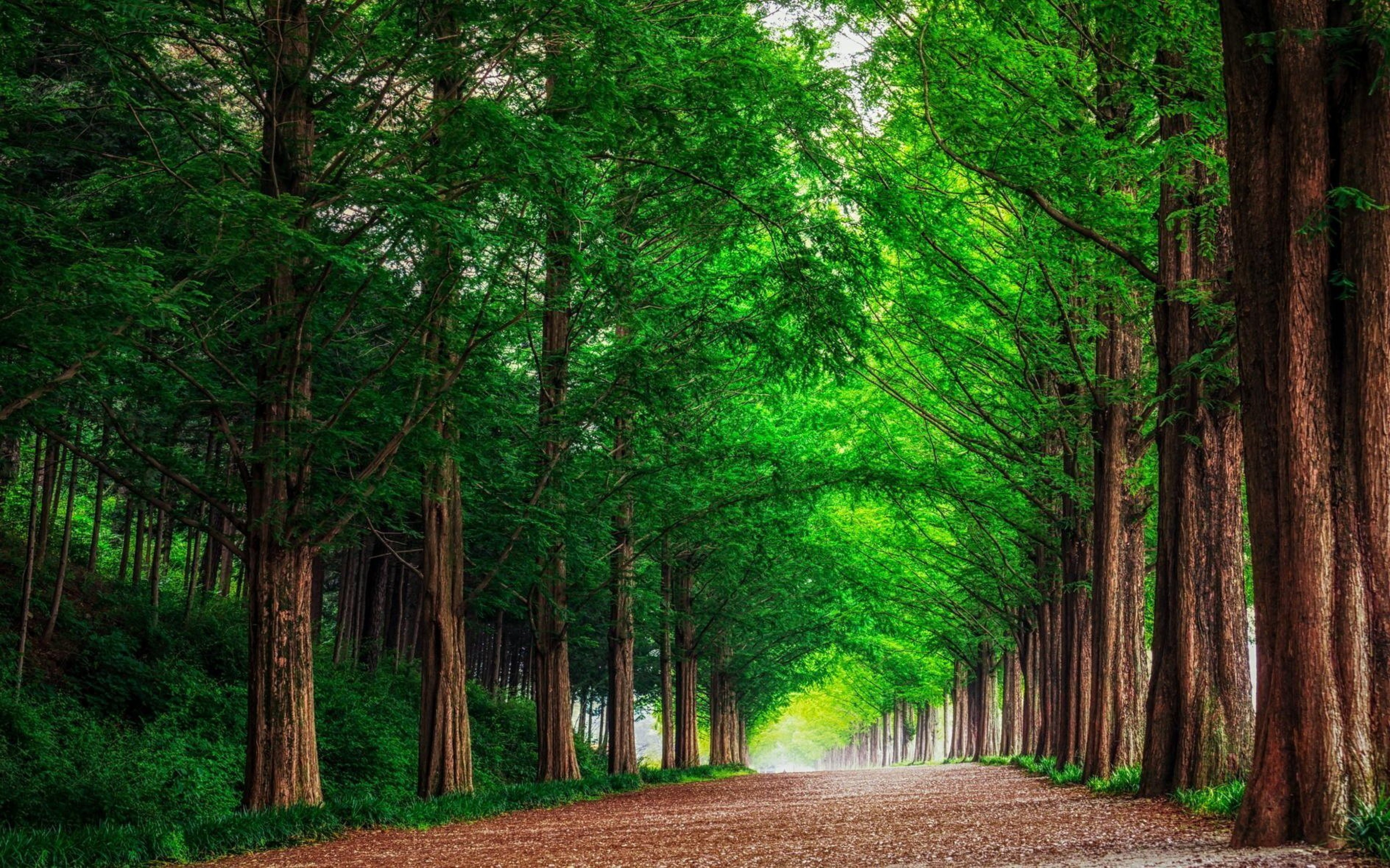 HD Background Green Forest Trees Straight Road Wallpaper 3840x2400