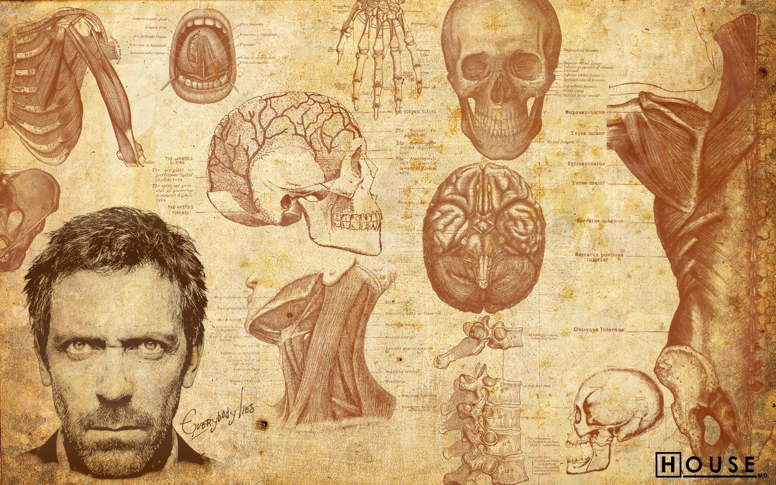 anatomy wallpaper background - photo #4