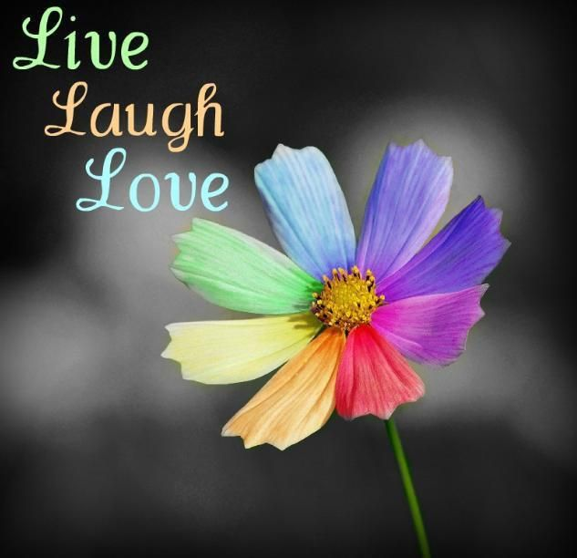 Live Laugh Love Quote Wallpapers