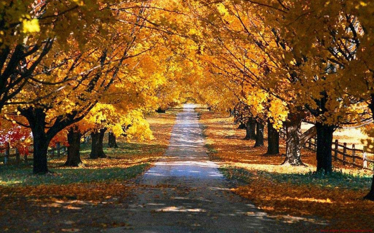 Autumn Road Nature Wallpapers Hd Desktop Wallpaper 1280x800