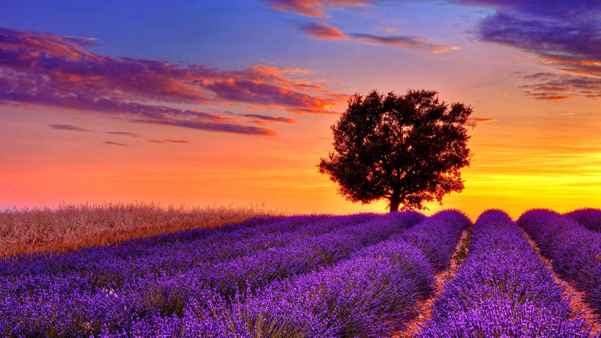 wallpapers download outstanding hd wallpapers of sunset field 1920x1080