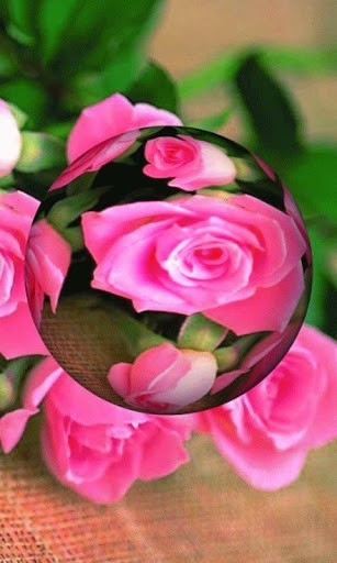 3d rose live wallpaper cool 3d rose live hd live wallpaper beautiful 307x512