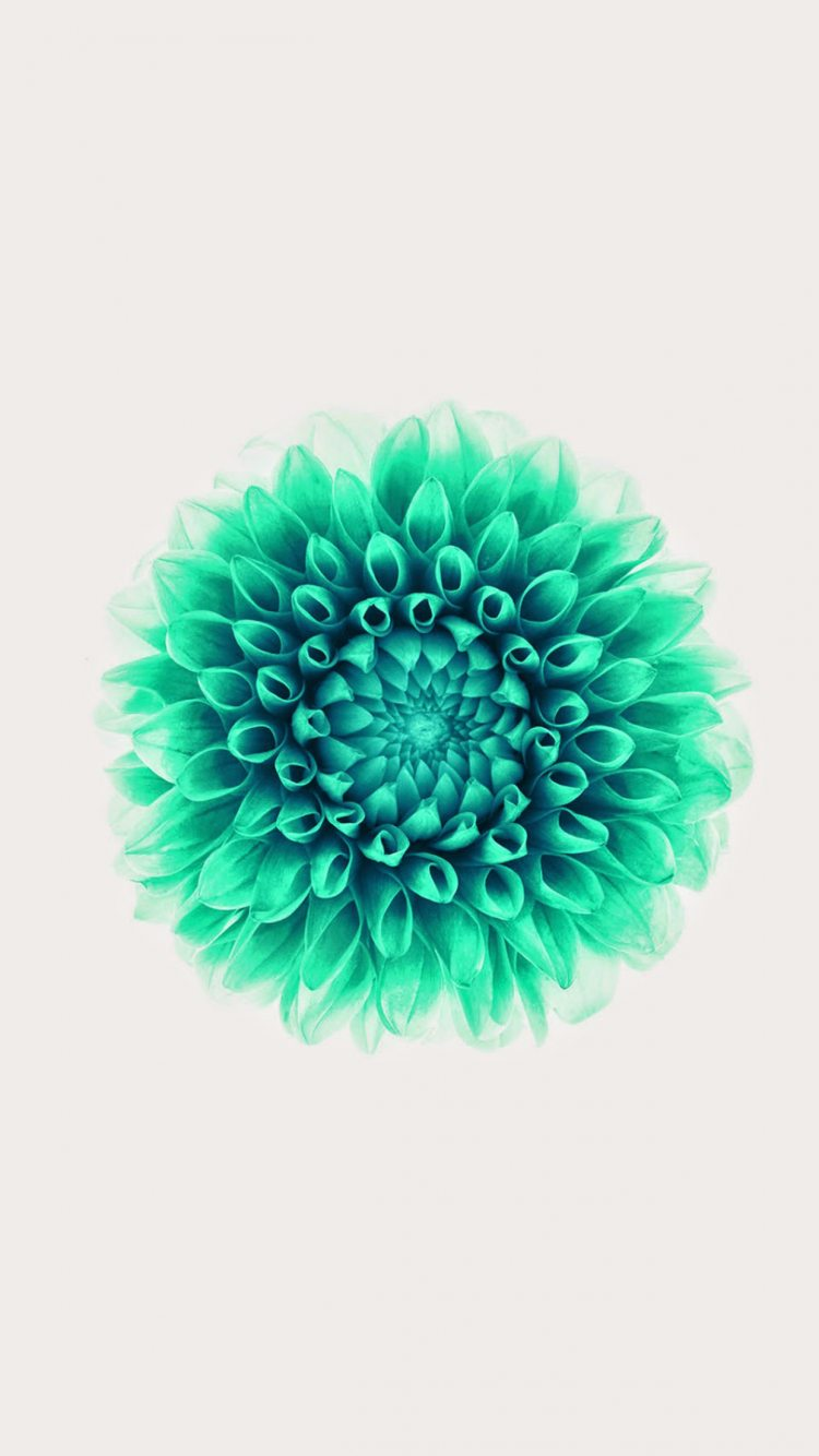 iPhone 6 Wallpaper Top Rated ios8 flower green white 750x1334