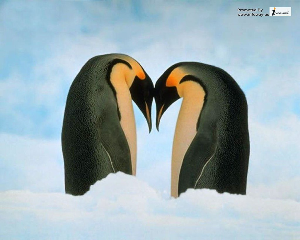 Love Penguins Wallpapers HD Love Penguins Wallpapers HD Flickr 1024x819