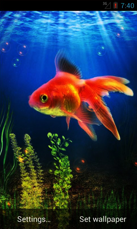 HOME Press Menu Wallpapers Live Wallpapers Goldfish 480x800