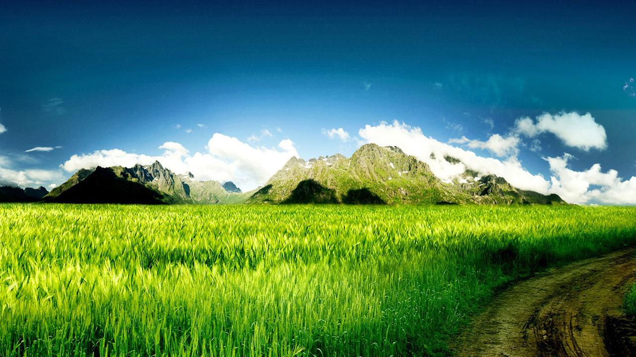 ... Wallpapers / Calendars: 3D Twitter Background - Green Grassland and