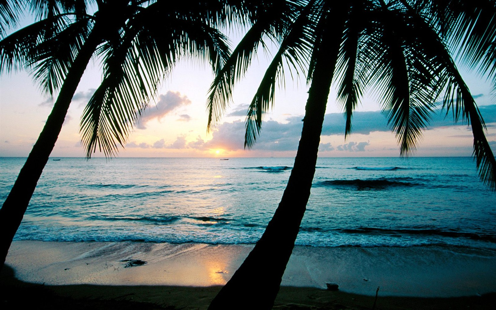 865665 palm tree wallpaperjpg 1680x1050