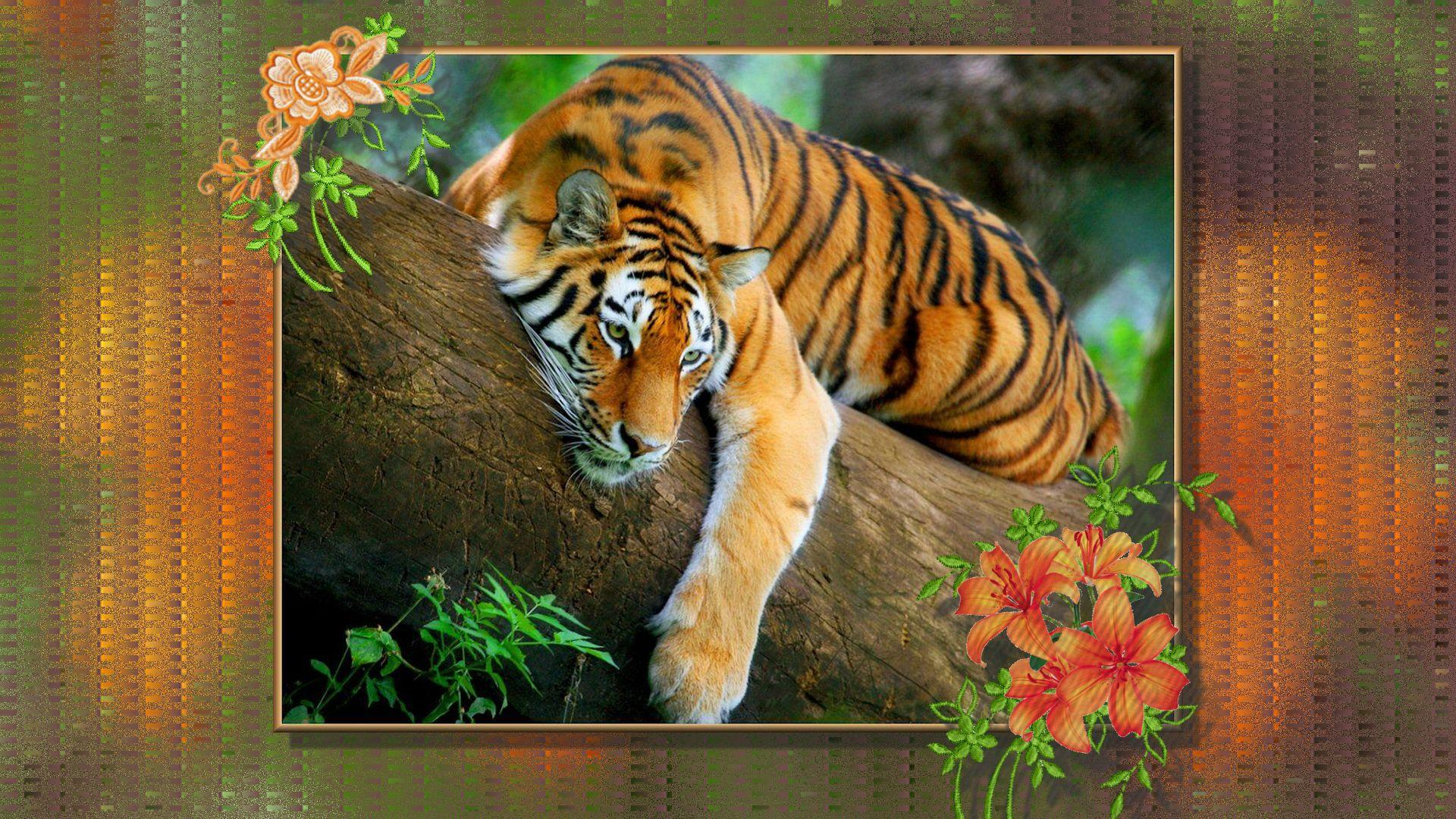 8589130531698 tiger lily wallpaper hdjpg 1920x1080