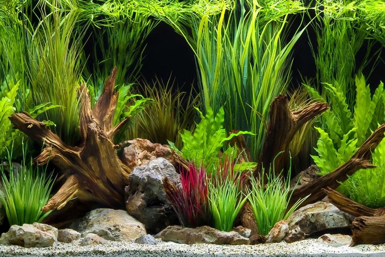 image relating to Printable Fish Tank Background referred to as 75+] Aquarium Record Photos upon WallpaperSafari