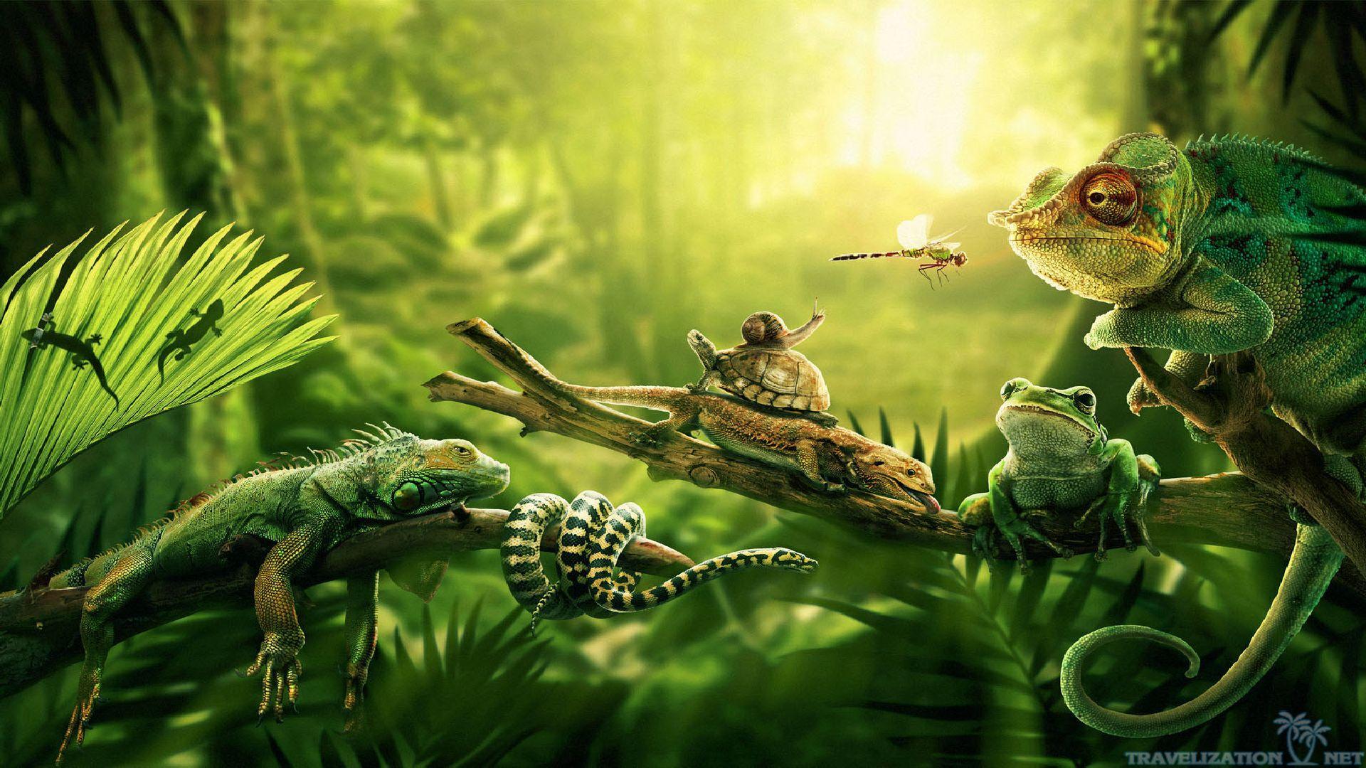 66+ Amazon Rainforest Wallpaper on WallpaperSafari