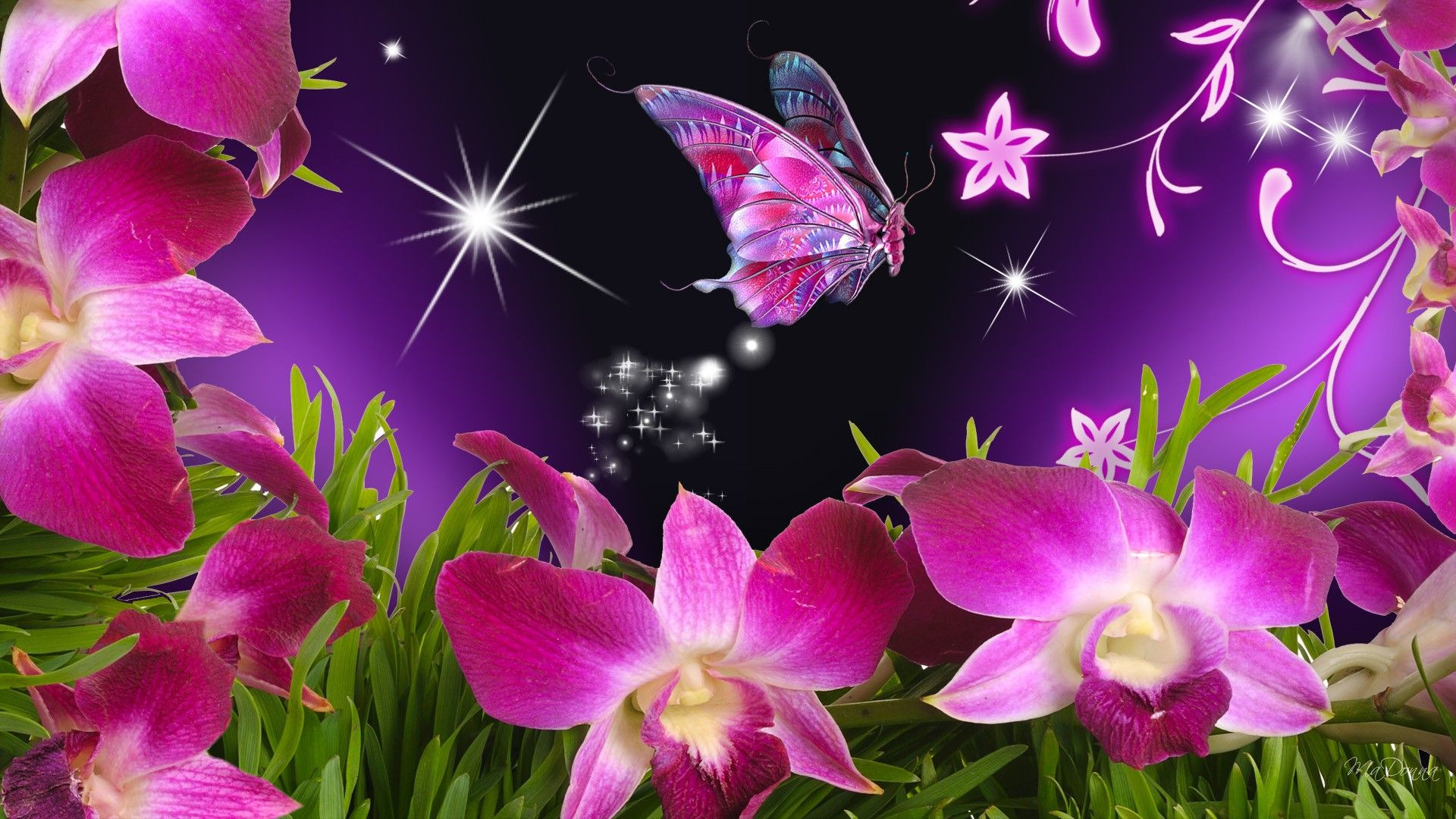 butterflies and flowers Butterfly Flowers Orchid Purple Stars 1920x1080