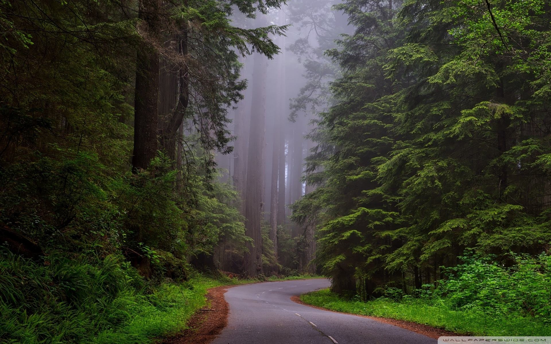 Redwood National Park California 4K HD Desktop Wallpaper for 1920x1200