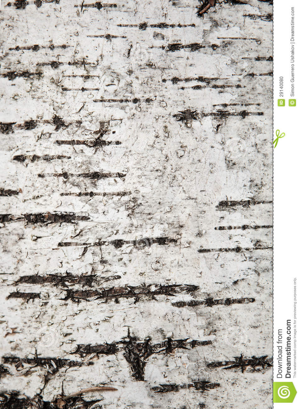 Birch bark wallpaper with texture wallpapersafari