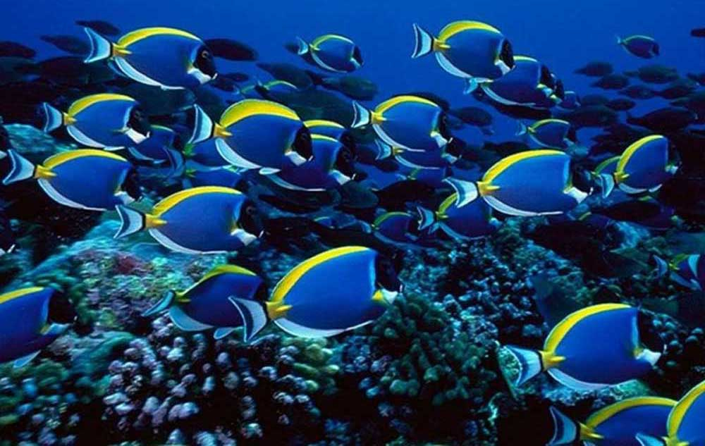 Colorful Tropical Freshwater Fish Hd Colorful Fish Wallpaper Tropical 1000x633