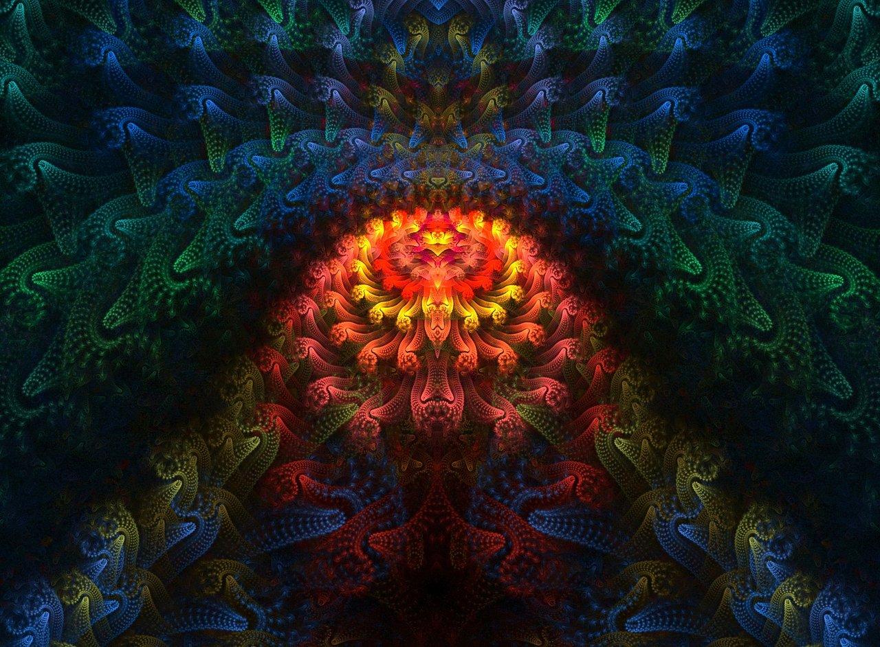 Colorful Coral Reef Wallpaper - WallpaperSafari   1280 x 942 jpeg 301kB