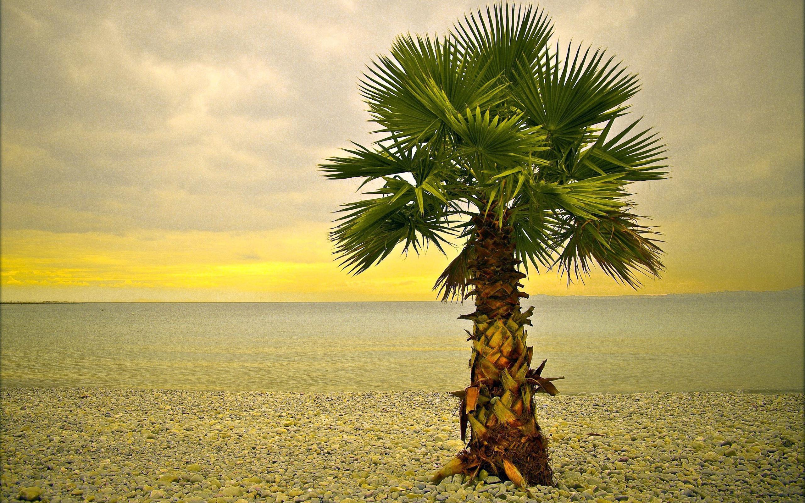 Palm Tree The Beach Sunset Stone Wallpaper 2560x1600