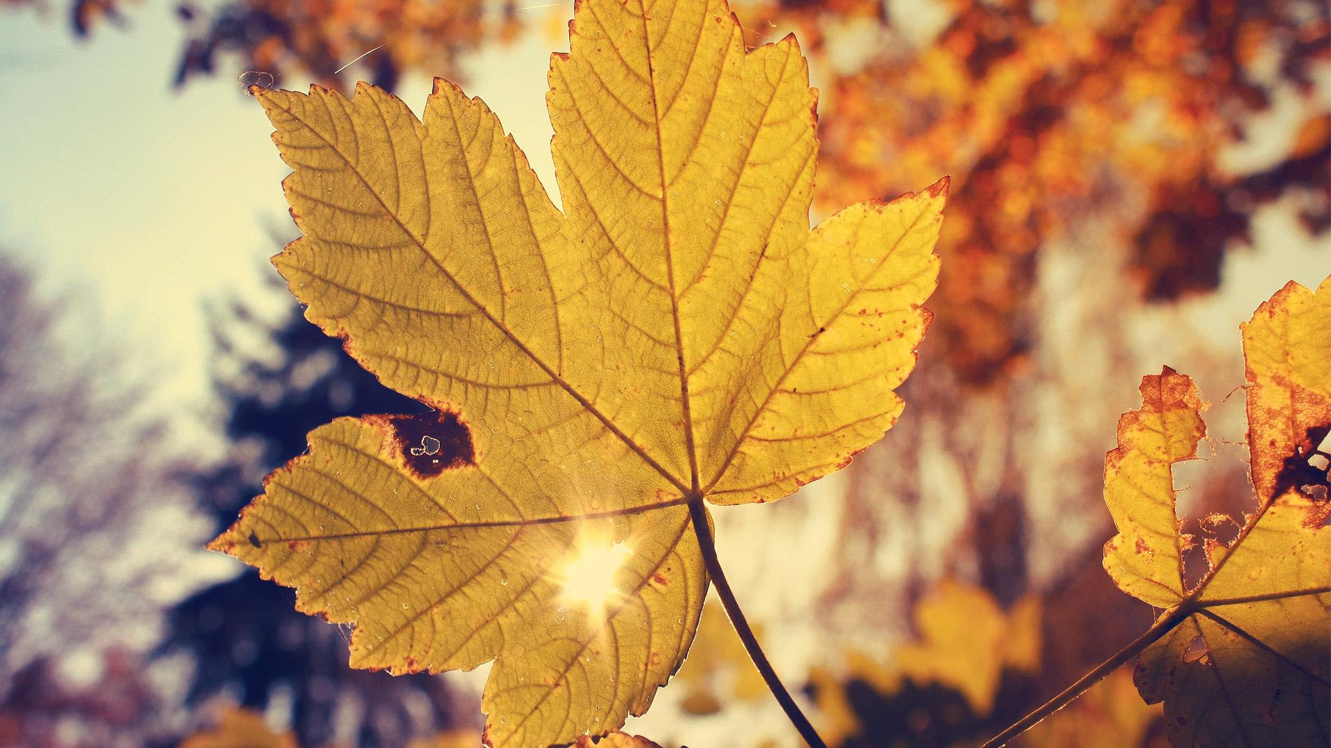 autumn wallpapers gallery d5jbtxq wallpaper 1920x1080