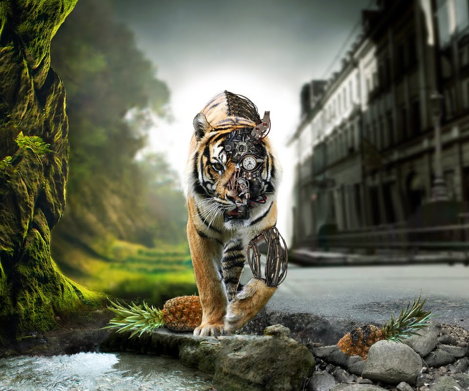 Animated Tiger Wallpaper - WallpaperSafari - photo#16