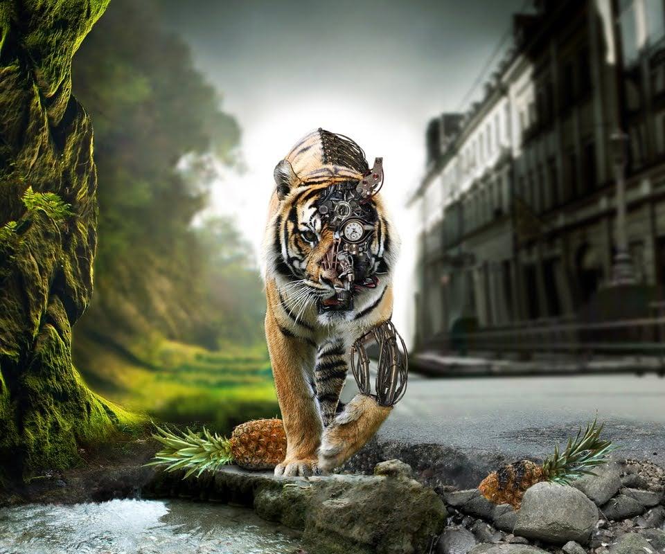 Animated Tiger Wallpaper