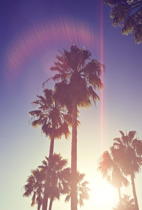 Beautiful Palm Trees Iphone Wallpapers Wallpapersafari