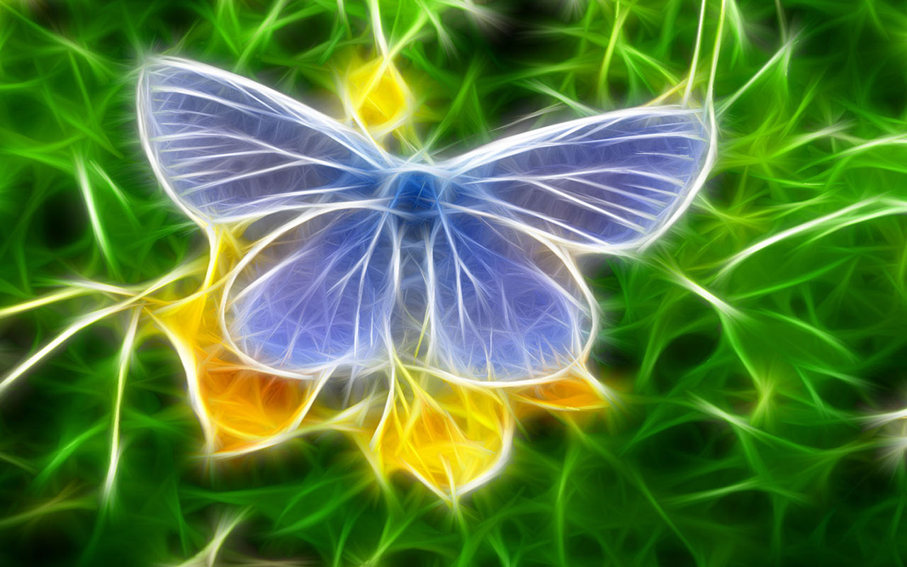 Colorful creative butterfly wallpaper   HD Wallpapers 1280x800