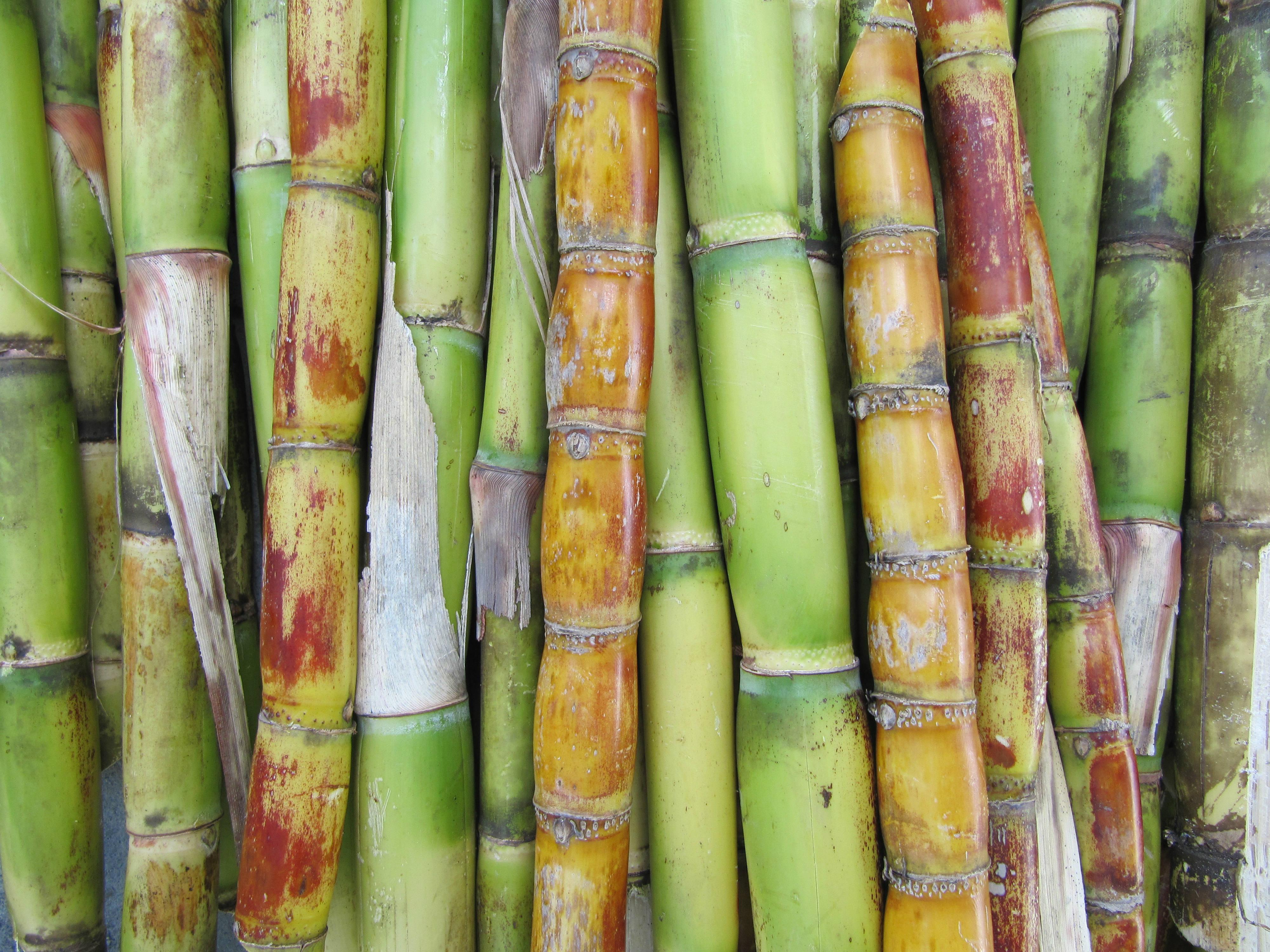 Sugar Cane You Can Eat Raw 4000x3000