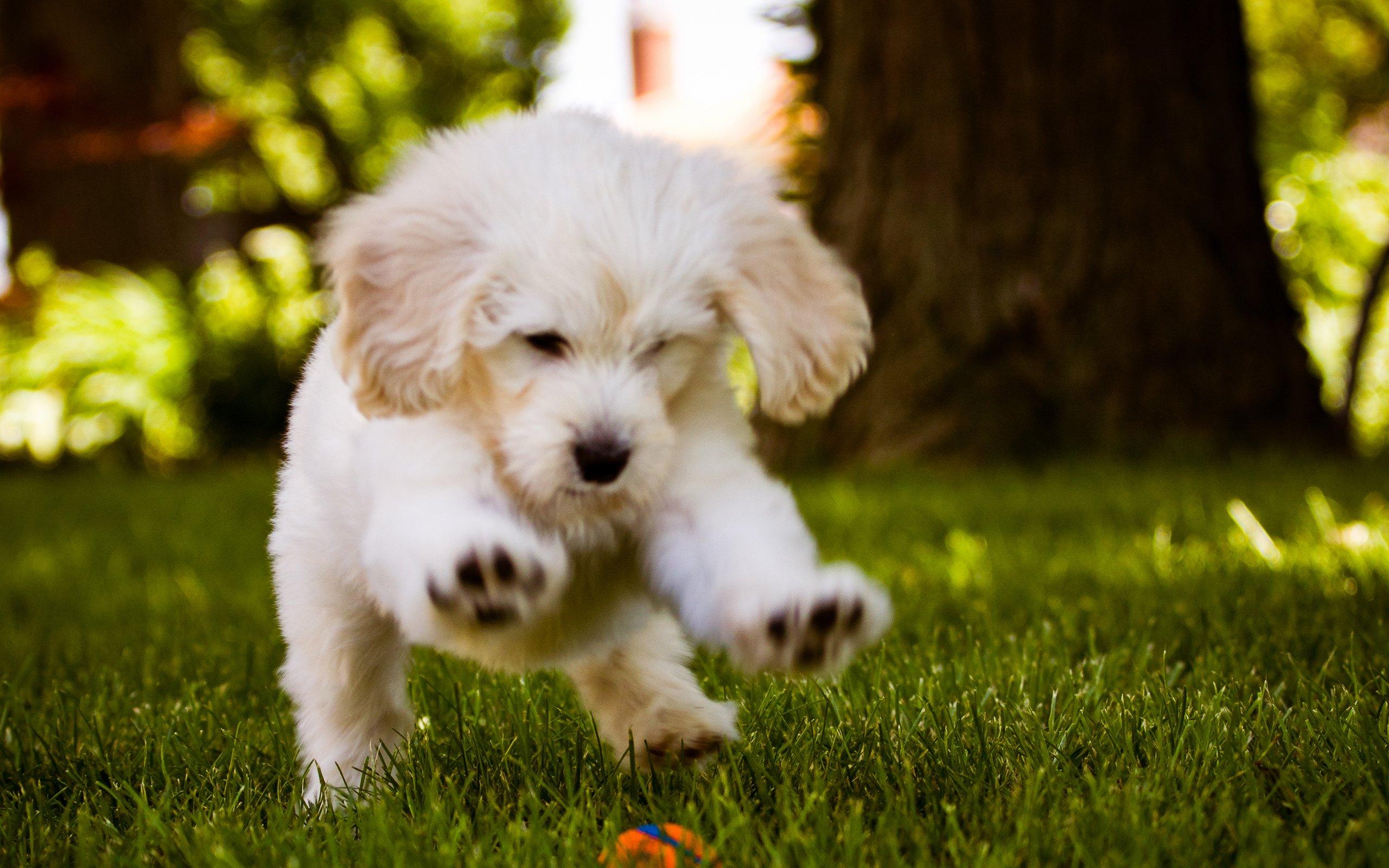 Wallpaper Little Dog Playing In The Wood HD Wallpaper Desktop 2560x1600