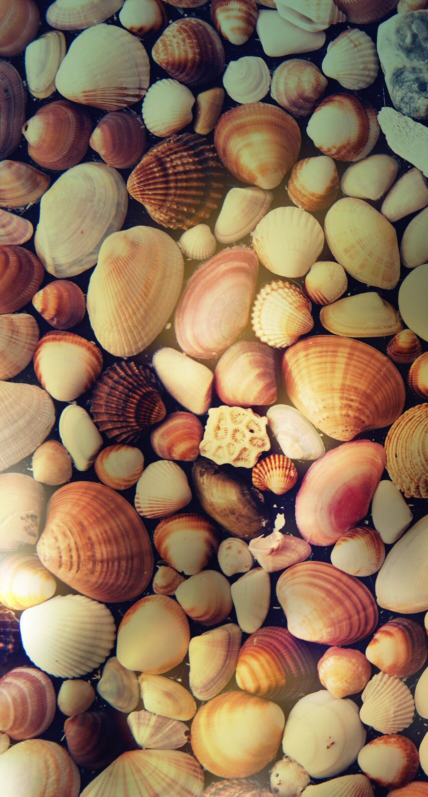 Shells Wallpaper Awesome Wallpapers Holiday wallpaper Beach 854x1590