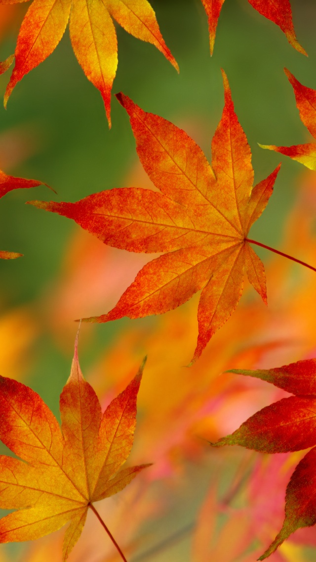 Free Download Autumn Leaf Pattern 640x1136 For Your