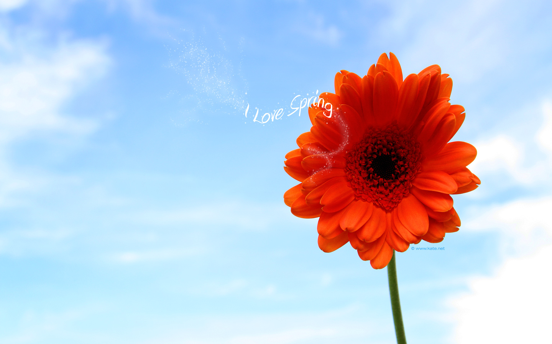 love spring wallpaper photos wallpaper kate net created 4 16 09 1440x900