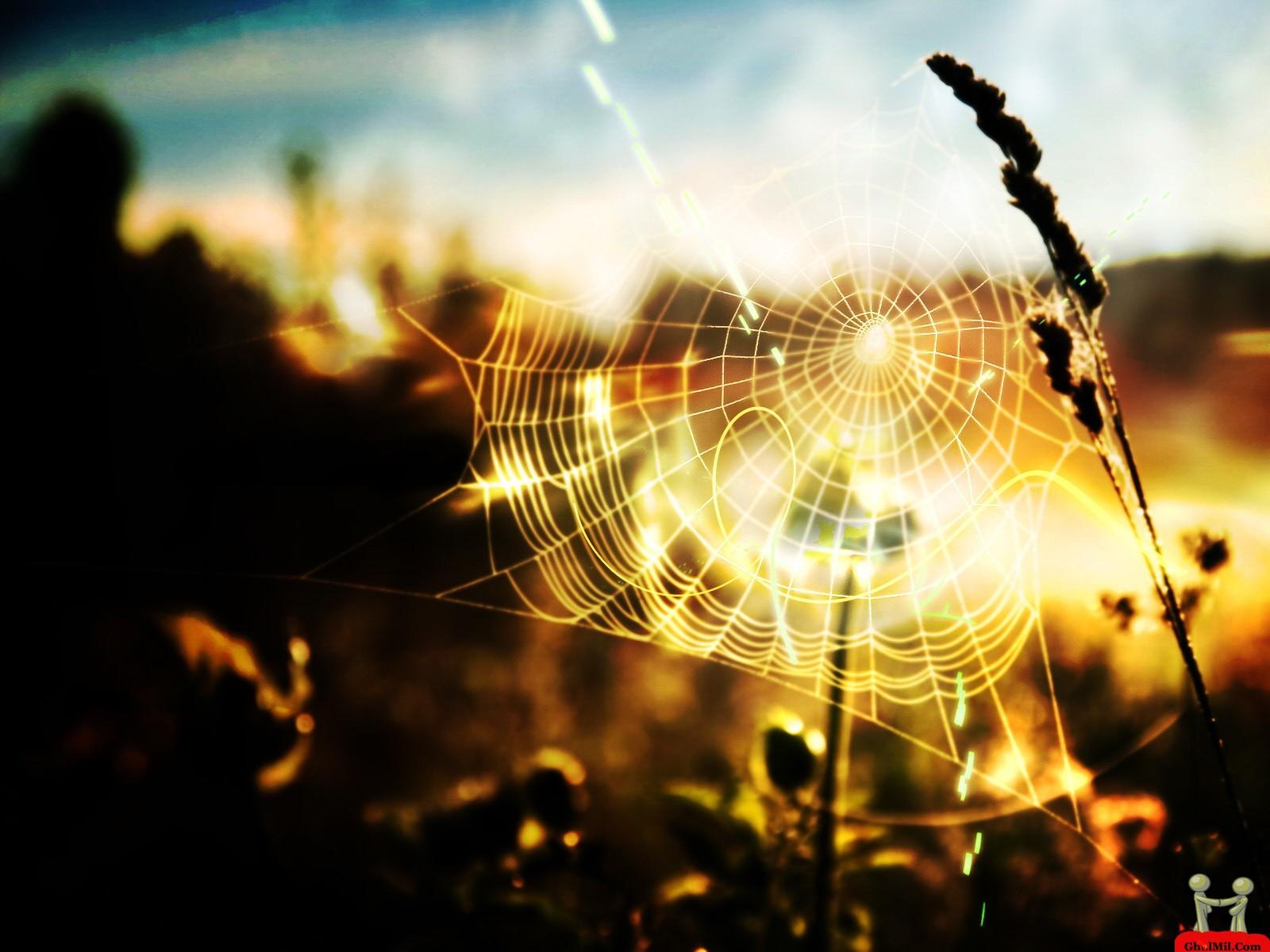 Natural Spider Web HD Wallpaper E Entertainment 1600x1200