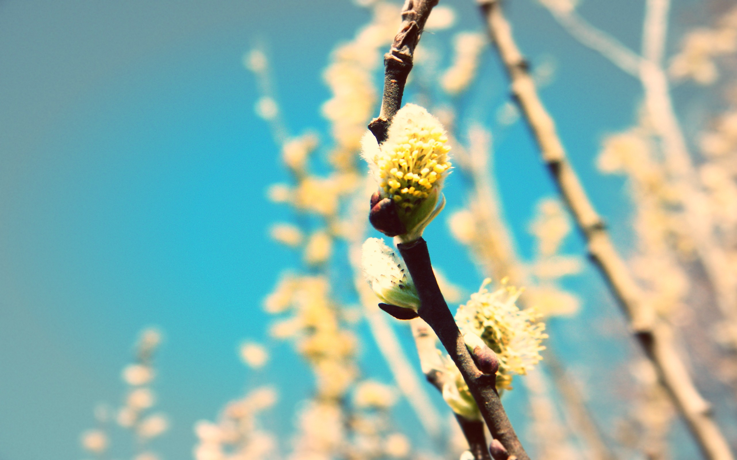 Spring Buds wallpapers Spring Buds stock photos 2560x1600