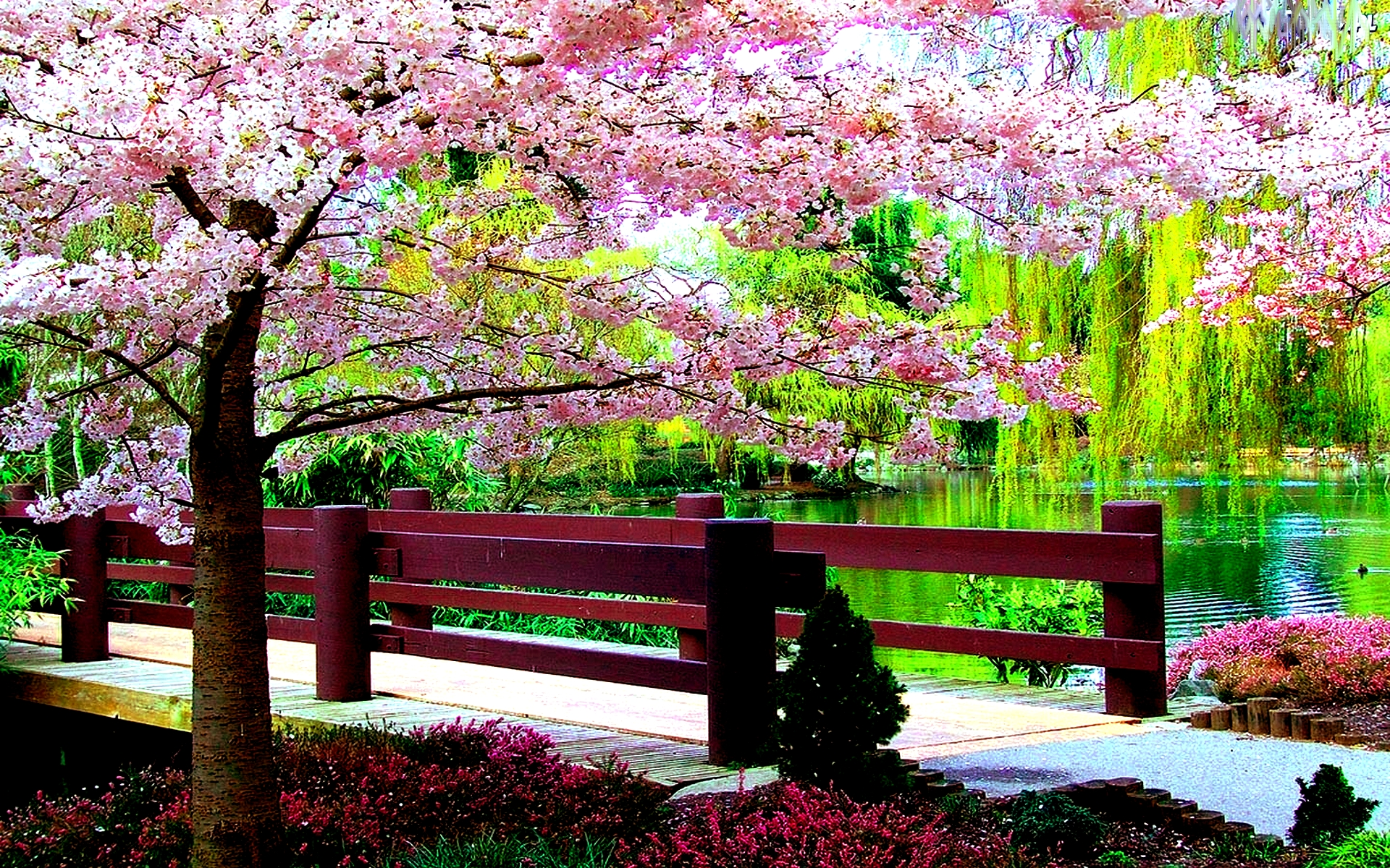 free springtime backgrounds wallpapersafari