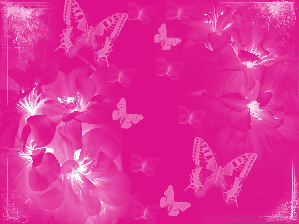 Free Download Pink Butterfly Wallpapers Pink Butterflies