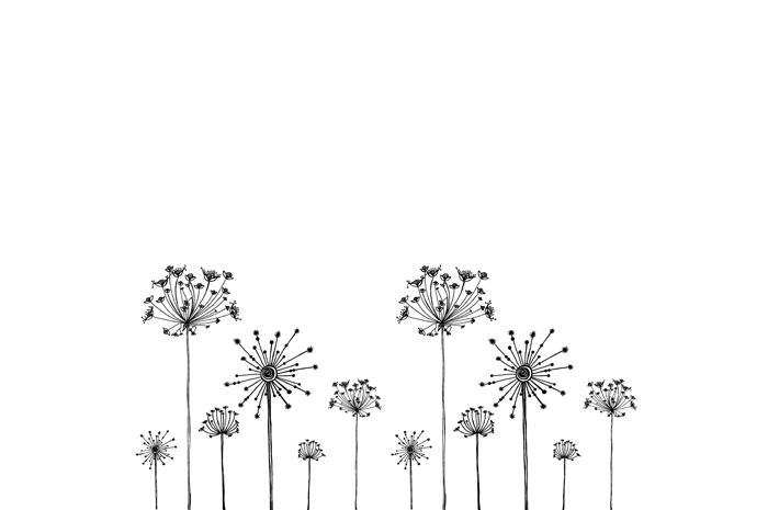 Pin Dandelion Drop Dew Water Blue Wallpapers Macro Download on 700x465