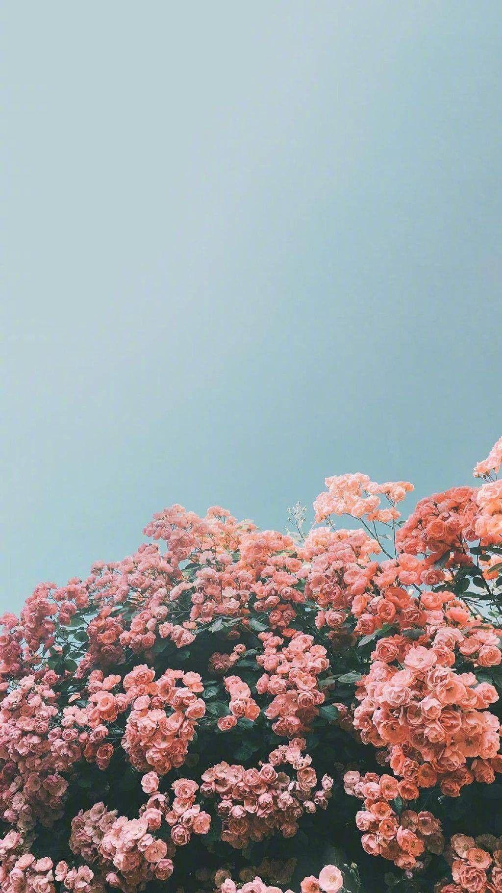 100 Beautiful iPhone wallpaper iphone background summer flower 1024x1821