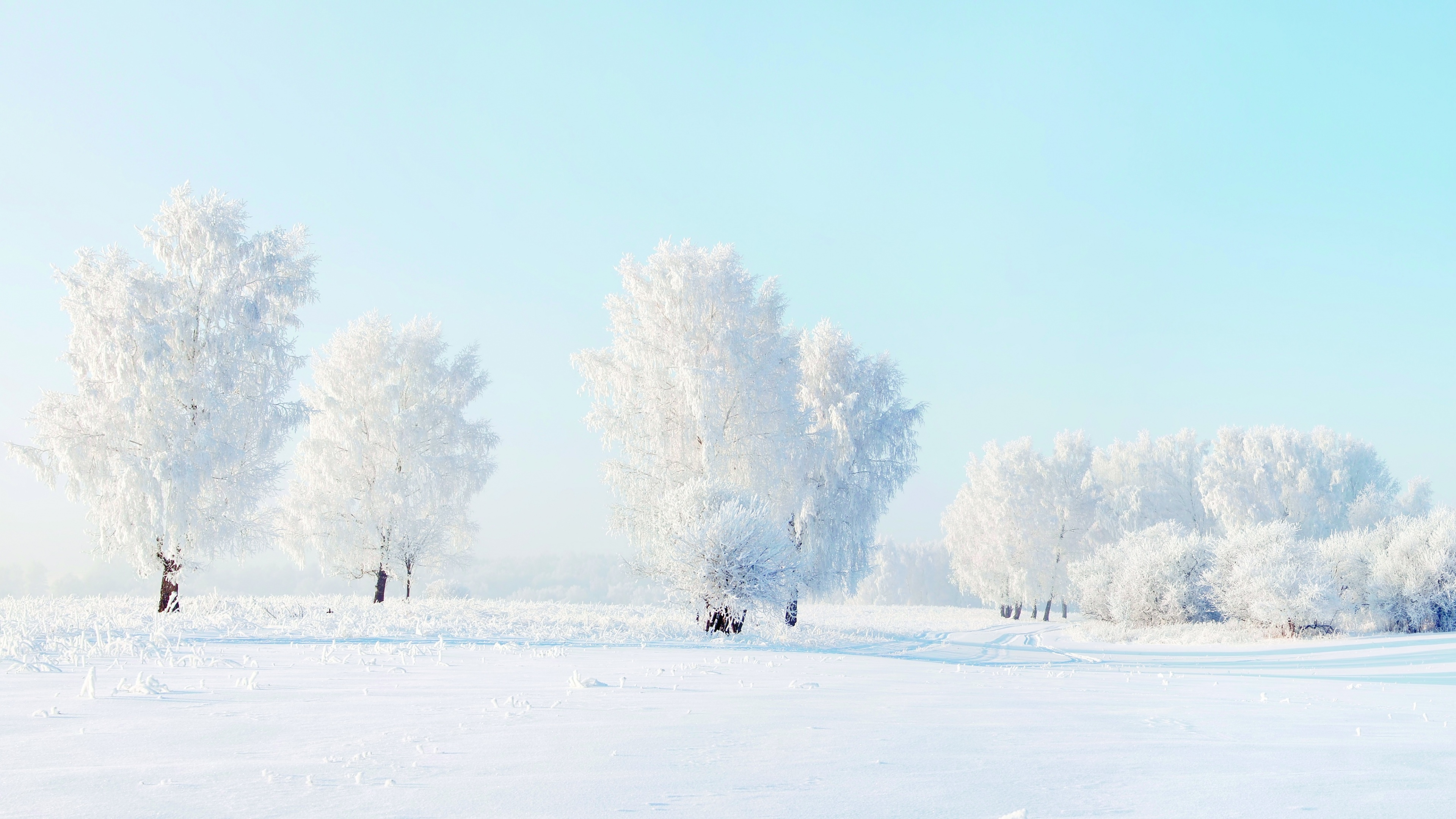 Winter Snow Trees Frost Wallpapers   3840x2160   1706835 3840x2160